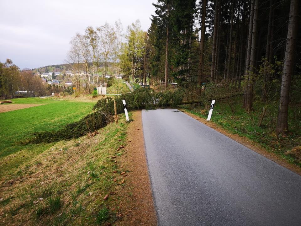 TH1 Baum auf Straße