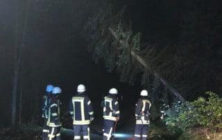 TH 1 | umgestürzter Baum 2